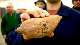 Süßkartoffel mit natürlichen Labeling