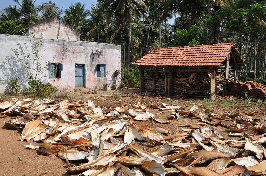 Trocknung der Palmenblätter für Arekapak