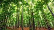 Holz ist ein nachwachsender Rohstoff (Bild: Brambles)