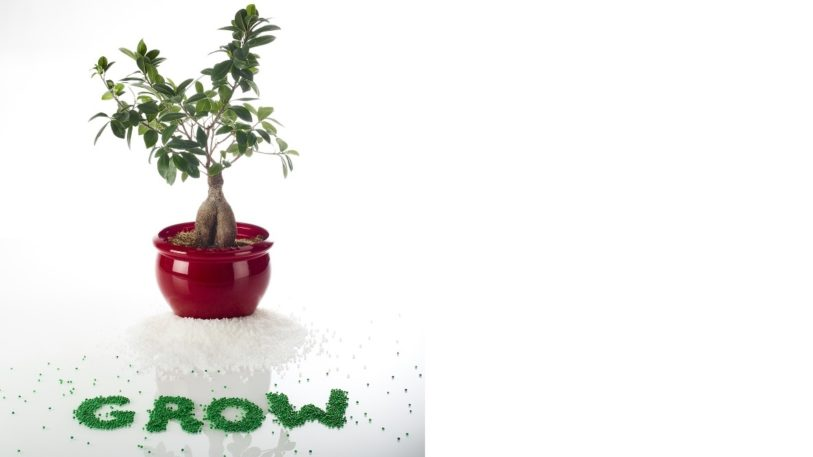 Biobasierte Hotmelts der Reihe Jowatherm® GROW (Bild: Jowat SE)