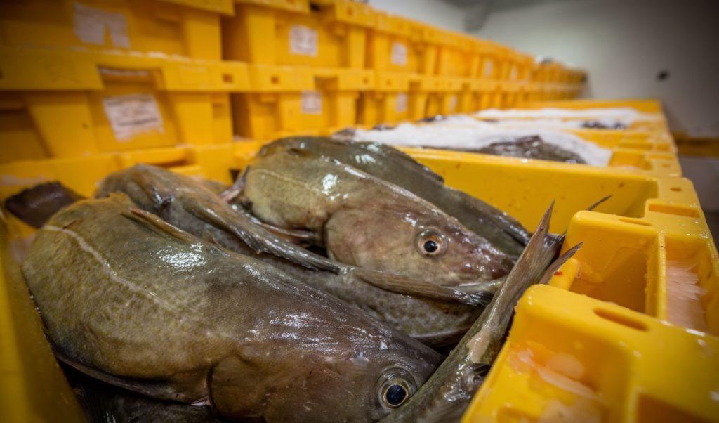 Die Fische werden nach Gewicht in Kisten sortiert.
