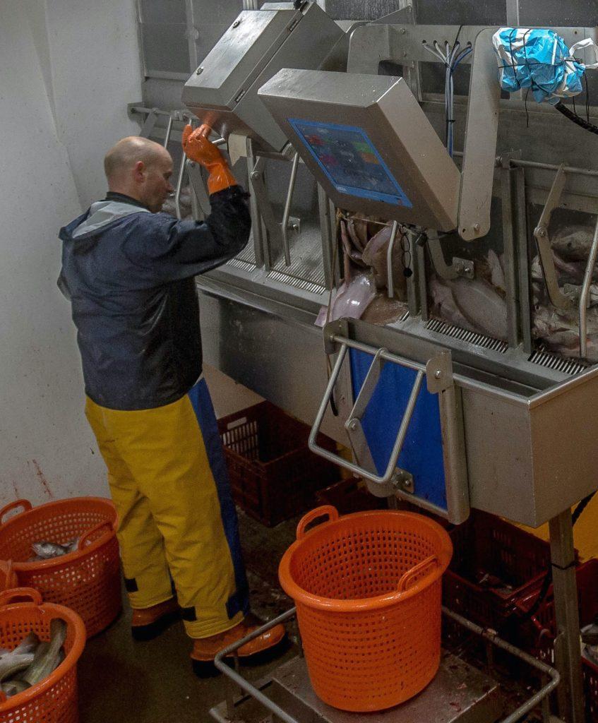 Fischfang wird auf einer Flachwaage verwogen und in Eimer verpackt.
