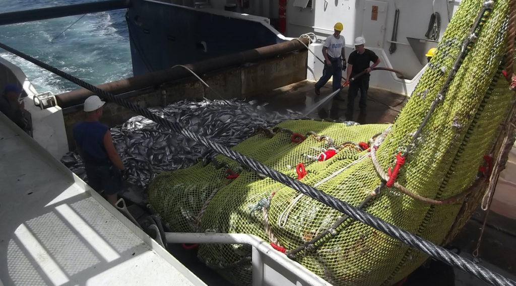 Einholen eines Fischernetzes auf See