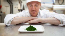 Person vor Teller mit Algen
