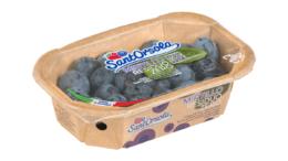 Blaubeerschale mit kompostierbarer Folie