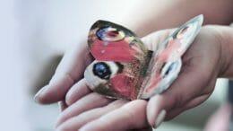 Konturensachet mit einer Zweikammerlösung in Form eines Schmetterlings
